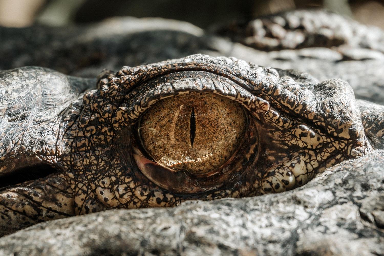 Ein Auge einer Echse. Foto: Samuel Scrimshaw/Unsplash