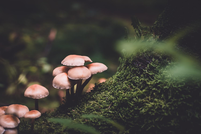Pilze im Wald. Foto: Presetbase Lightroom Presets/Unsplash